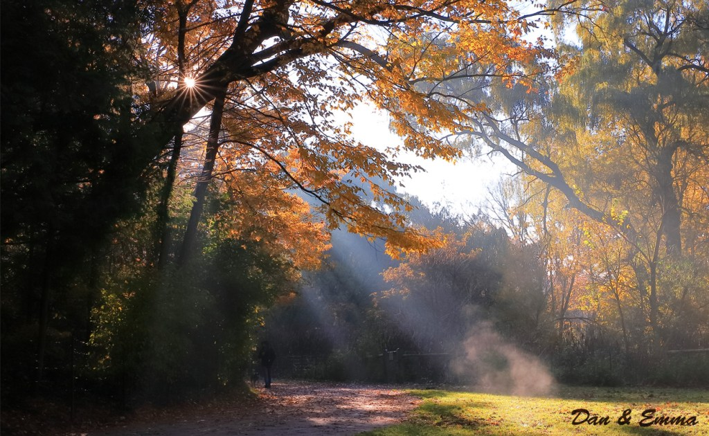 Autumn Trail in the Woods by Dan & Emma