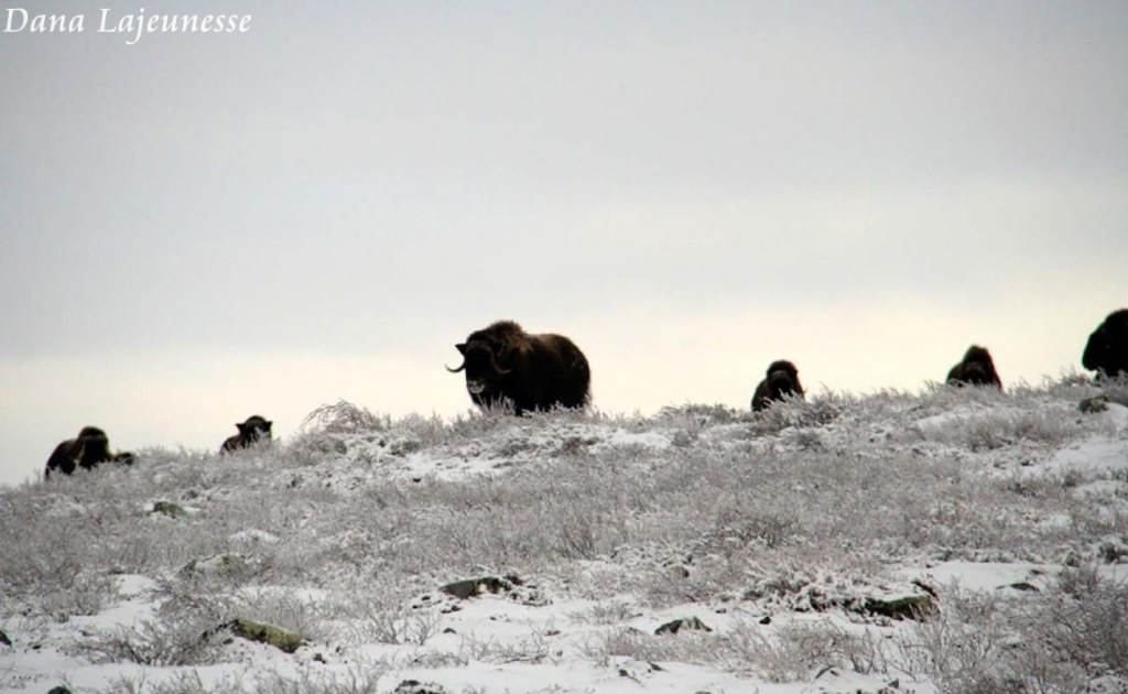 Winter Visitors by Dana Lajeunesse