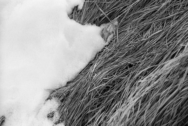 Winter Grasses and Snow, Rocky Mountain National Park, Colorado