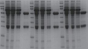 Simpson Biotech Protein G Resin