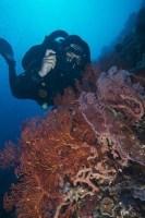 Rebreather Diver in Bunaken