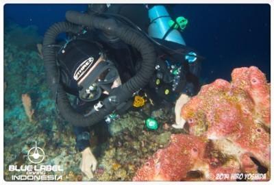 Exploration Diving CCR