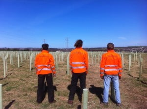 Whole Tree - Tree Planters
