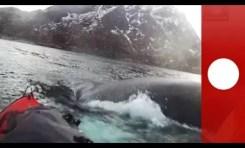 Na kajak z... wielorybami