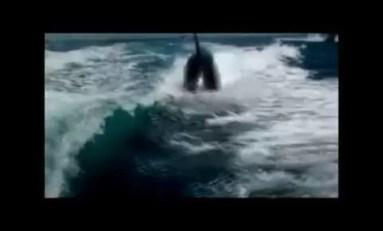 Na łodzi z orkami