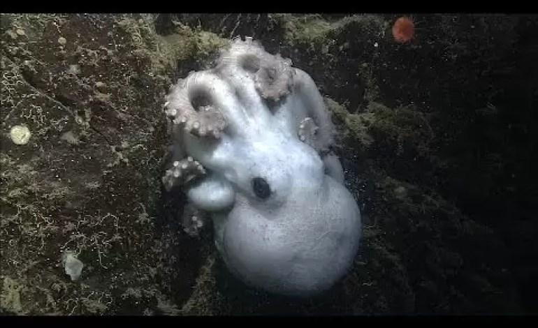 Najcierpliwsza Mama w przyrodzie wysiaduje jaja 4,5 roku