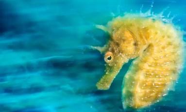 Kto jest najlepszym fotografem podwodnym roku 2016?