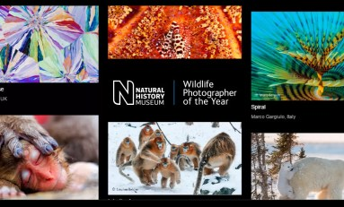 Wildlife Photographer of the Year 2017 - głosowanie trwa