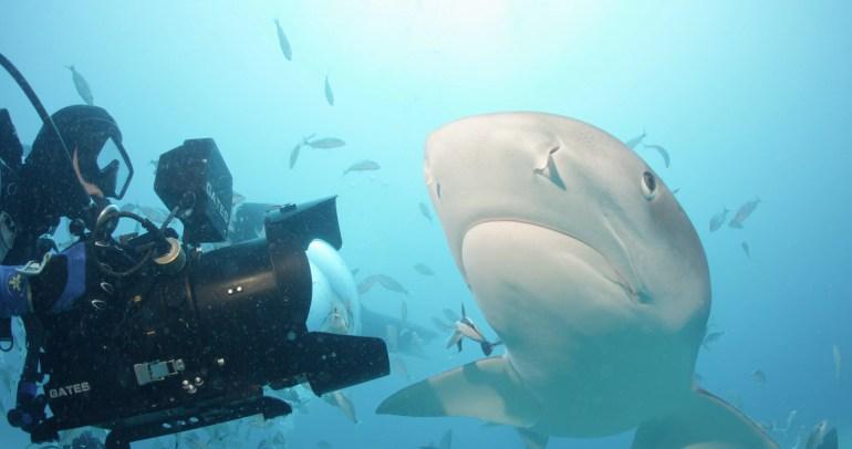 Film Sharkwater Extinción Roba Stewarta