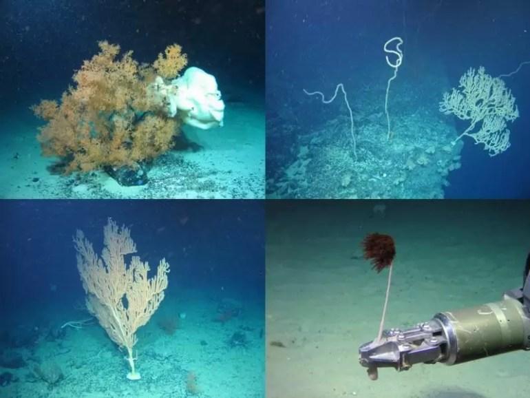 Coral e1541755669162