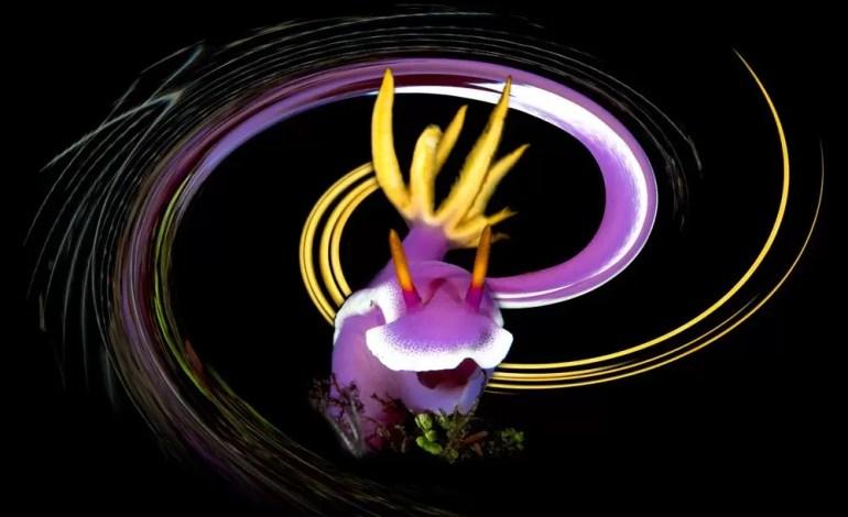 1 miejsce kategorii Sztuka podwodna Underwater Art Prosty efekt wirowania dodany do obrazu wykonanego na Bali w Indonezji fot Bruno Van Saen Ocean Art )
