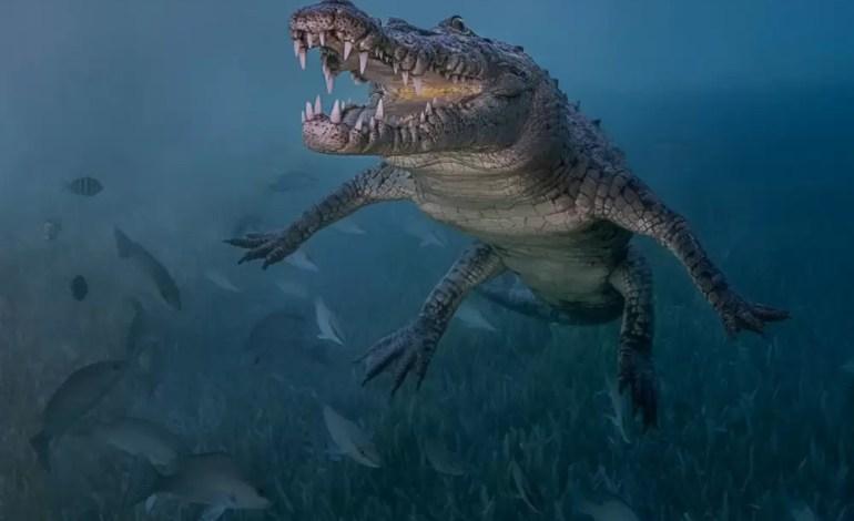 2 miejsce w kategorii początkujących DSLR Dziki krokodyl w Jucaro na Kubie fot Antonio Pastrana Ocean Art