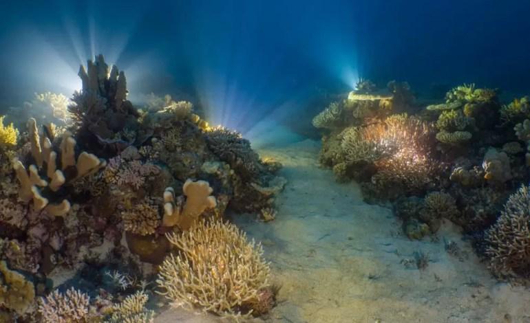 3 miejsce w kategorii rafy Eksperyment w oświetlaniu rafy nocą fot Alex Lindbloom Ocean Art