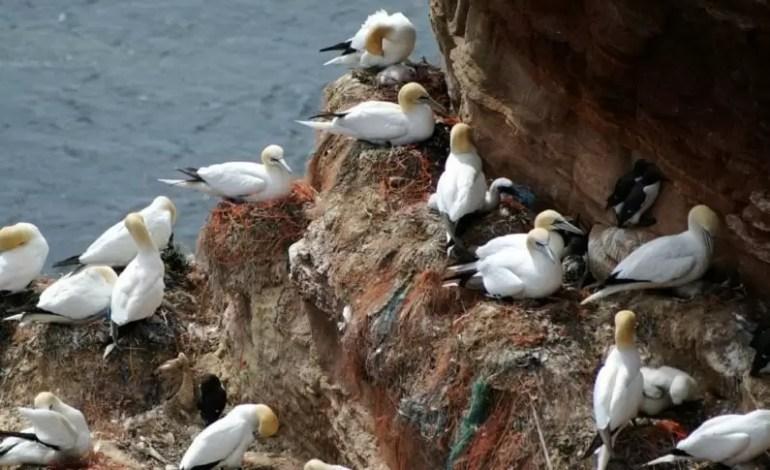 Minister Michael Creed zachęca irlandzką społeczność morską do oczyszczana oceanów