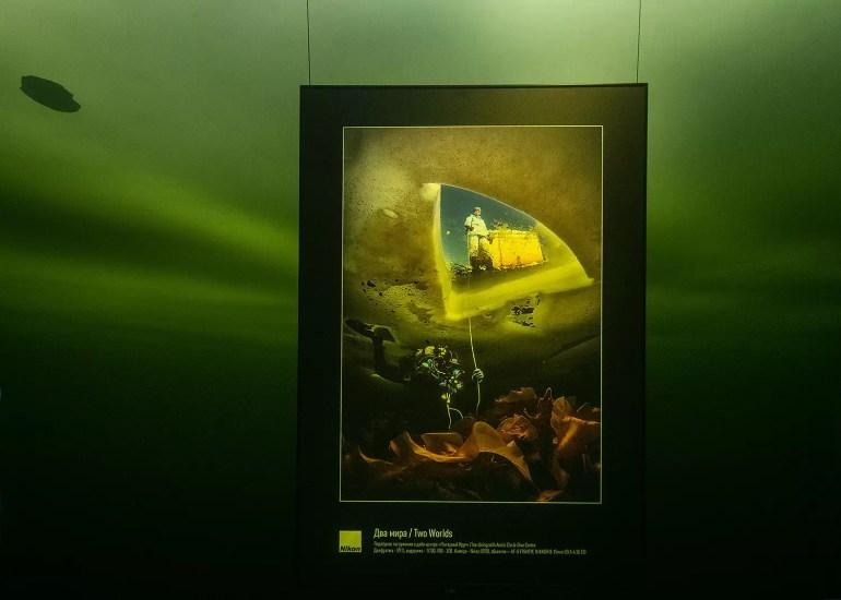 wystawa podwodna fot. Viktor Lyagushkin