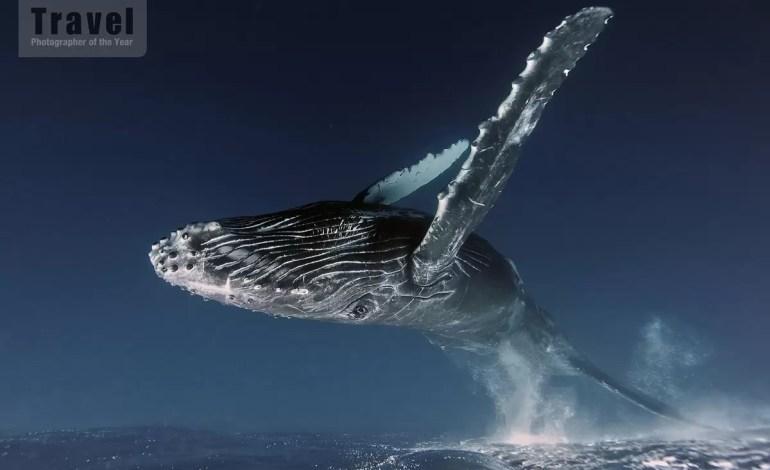 Wyróżnienie: Natura, życie morskie, przyroda -  Alex Zozulya, Rosja