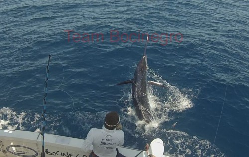Marlin On The Line