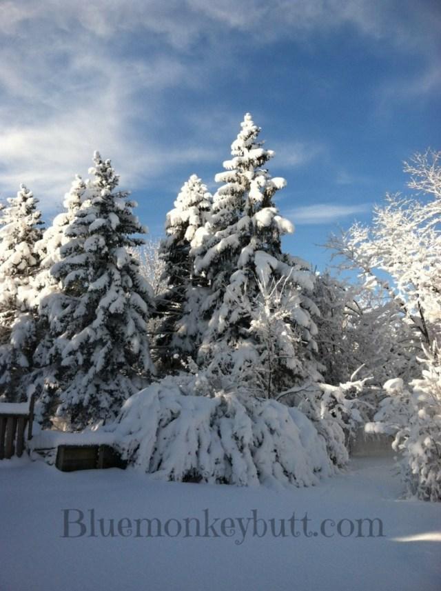 Snow in my backyard after Nemo