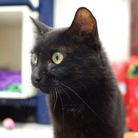 Rosie Posy Meow Monday Lollypop Farm Pet of the Week