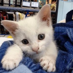 Meowdeling baby Rosie