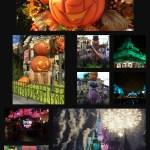 Wordless Wednesday – Fall at Magic Kingdom Park