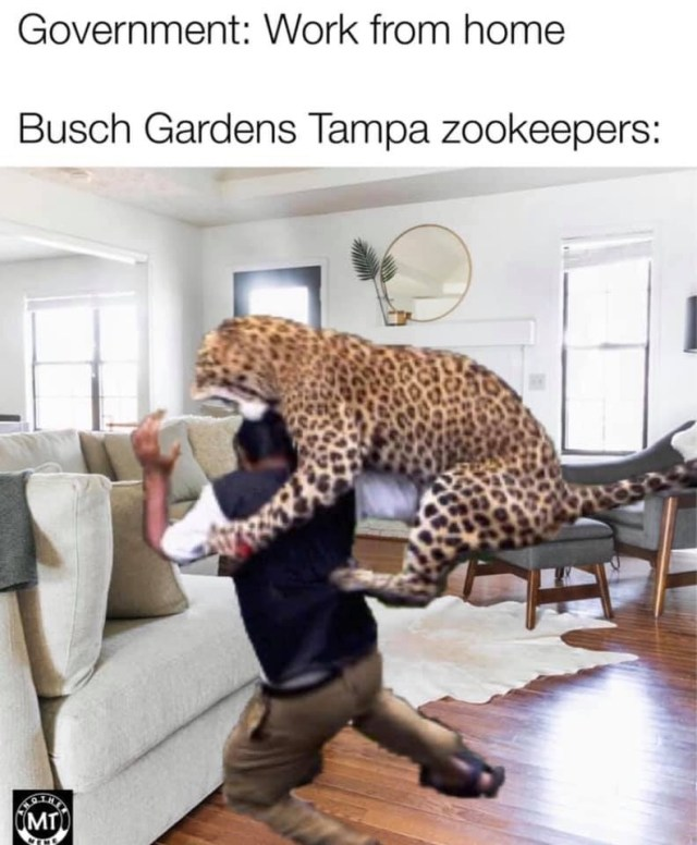 Meme of jaguar leaping on a man inside a house text says Government: work from home Busch Gardens Tampa Zookeepers: