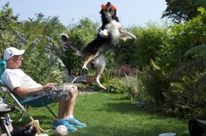 "Vencedor ""Cachorros brincando"" - Fotógrafo: Richard Shore"