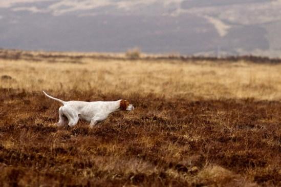 """Vencedor """"Cachorros trabalhando"""" - Fotógrafo: Susan Stone Amport"""