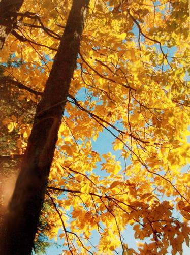 CK-Fall Colors