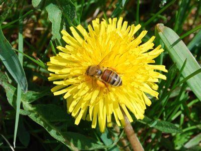 AS-BEE-1
