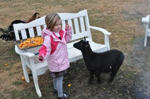 In addition to meeting Santa, youngsters got the chance to pet the animals and roast smores over and open fire!