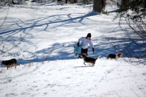 The 4 or so inches of snow made for perfect sledding. Yvette tried the hill out back this morning! So did the beagles!