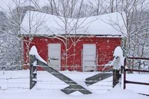 By Woody Greenberg : Shed in the snow at Colleen.