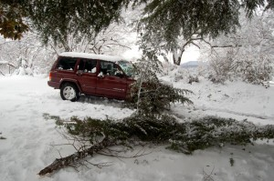 The heavy weight of the wet snow caused lots of branches to break from trees.