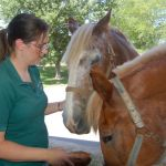Equine Rescue Yard Sale This Saturday 7-16-10 @ Rodes Farm