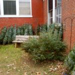 Nelson: Grinch Visits Rockfish Valley Community Center - Christmas Trees Stolen