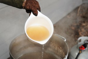 ©2014 Blue Ridge Life : Photos By BRL Mountain Photographer Paul Purpura : The freshly boiled sweetness from maple trees this past weekend at The Nature Foundation at Wintergreen. It's all part of their Maple Sugar Days celebration.