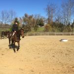 Nelson: Rodes Farm Stables Holds Open House