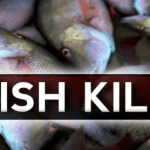 DEQ Investigating Fish Kill In Nelson County - Via WHSV (Harrisonburg)
