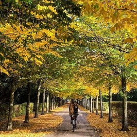 """Autumn biking in Copenhagen"""