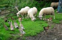permaculture-organic-farm