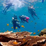 dive courses phi phi