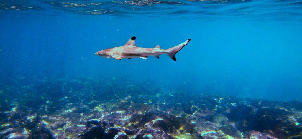 Shark eco tour phi phi island thailand