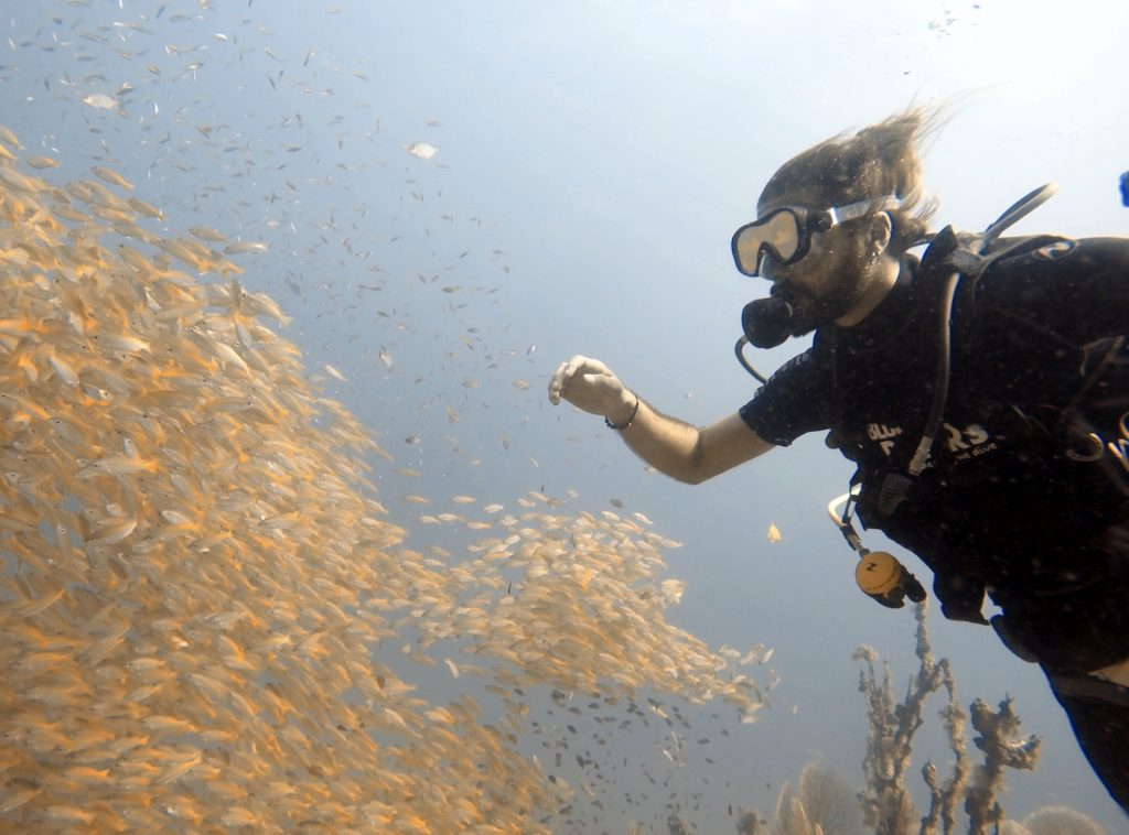 divers snappers dive trips phi phi island thailand