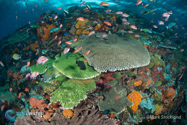 Best Diving In Indonesia Top 10 Bluewater Dive Travel