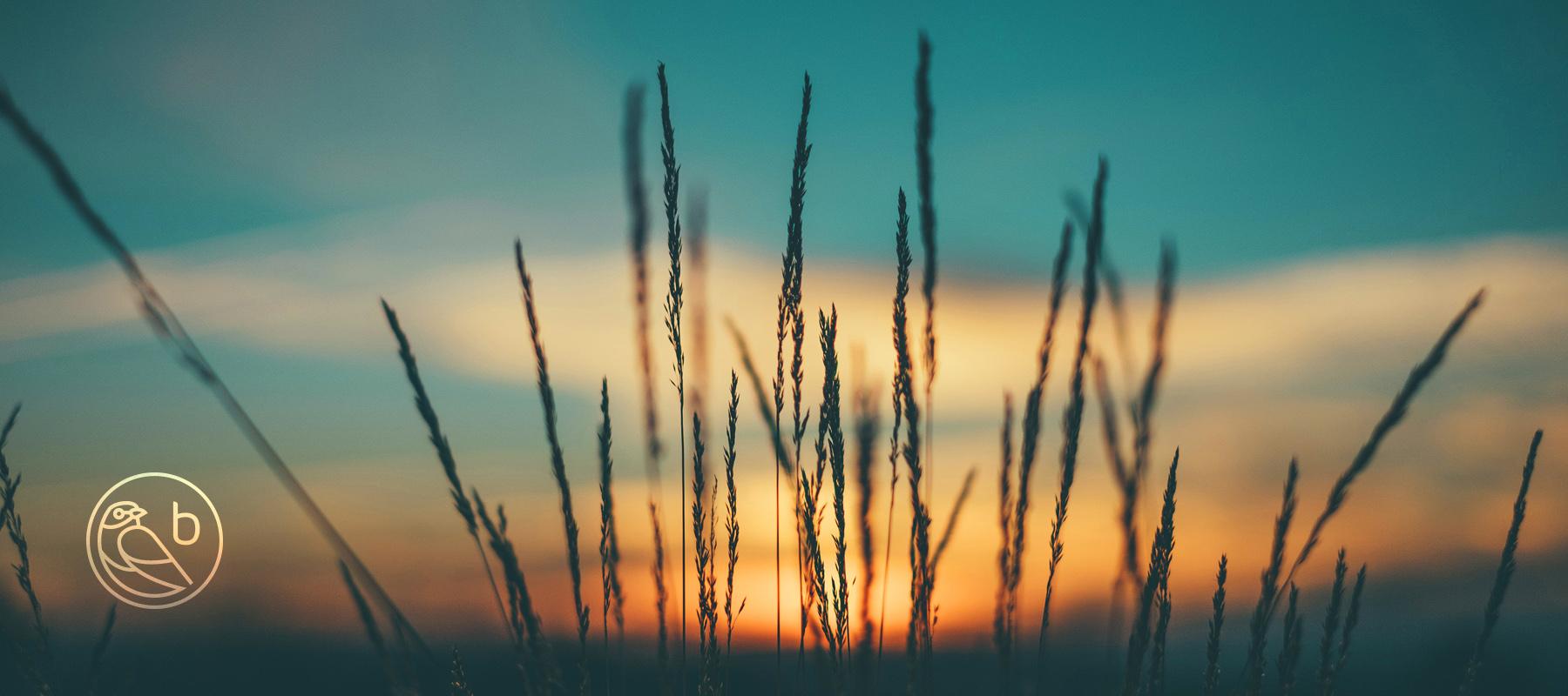 Bluewood Sunset