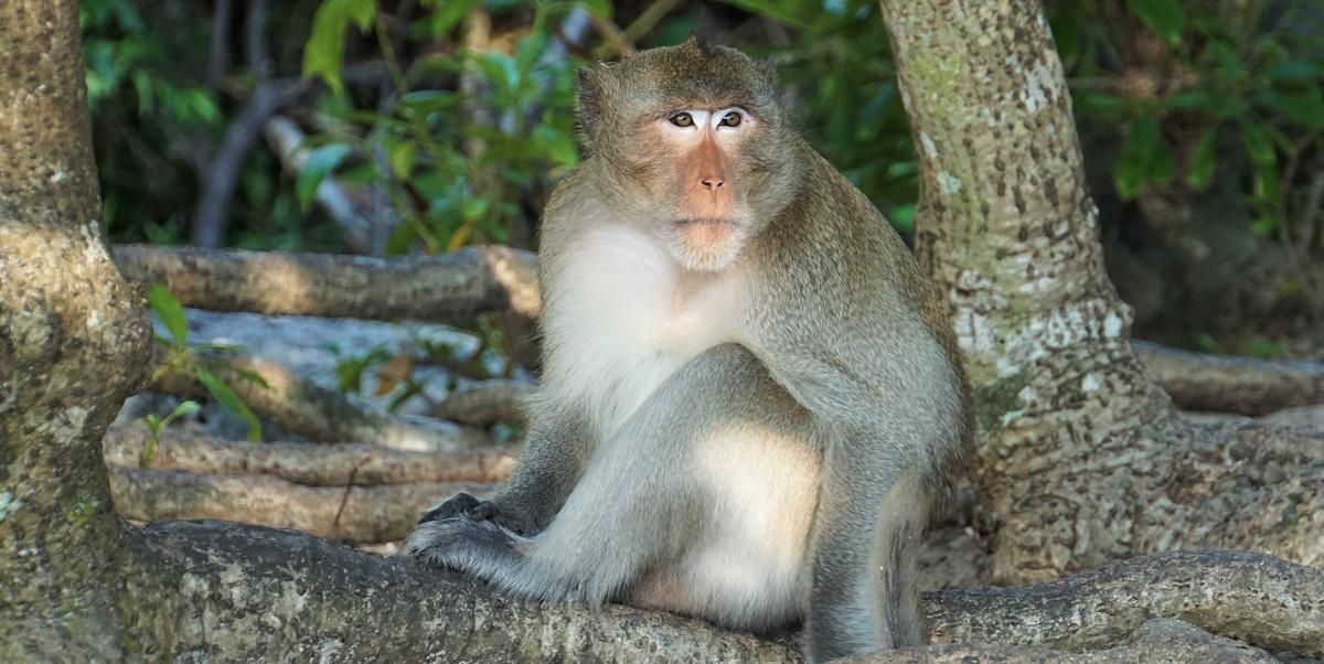 Resident on Monkey Island
