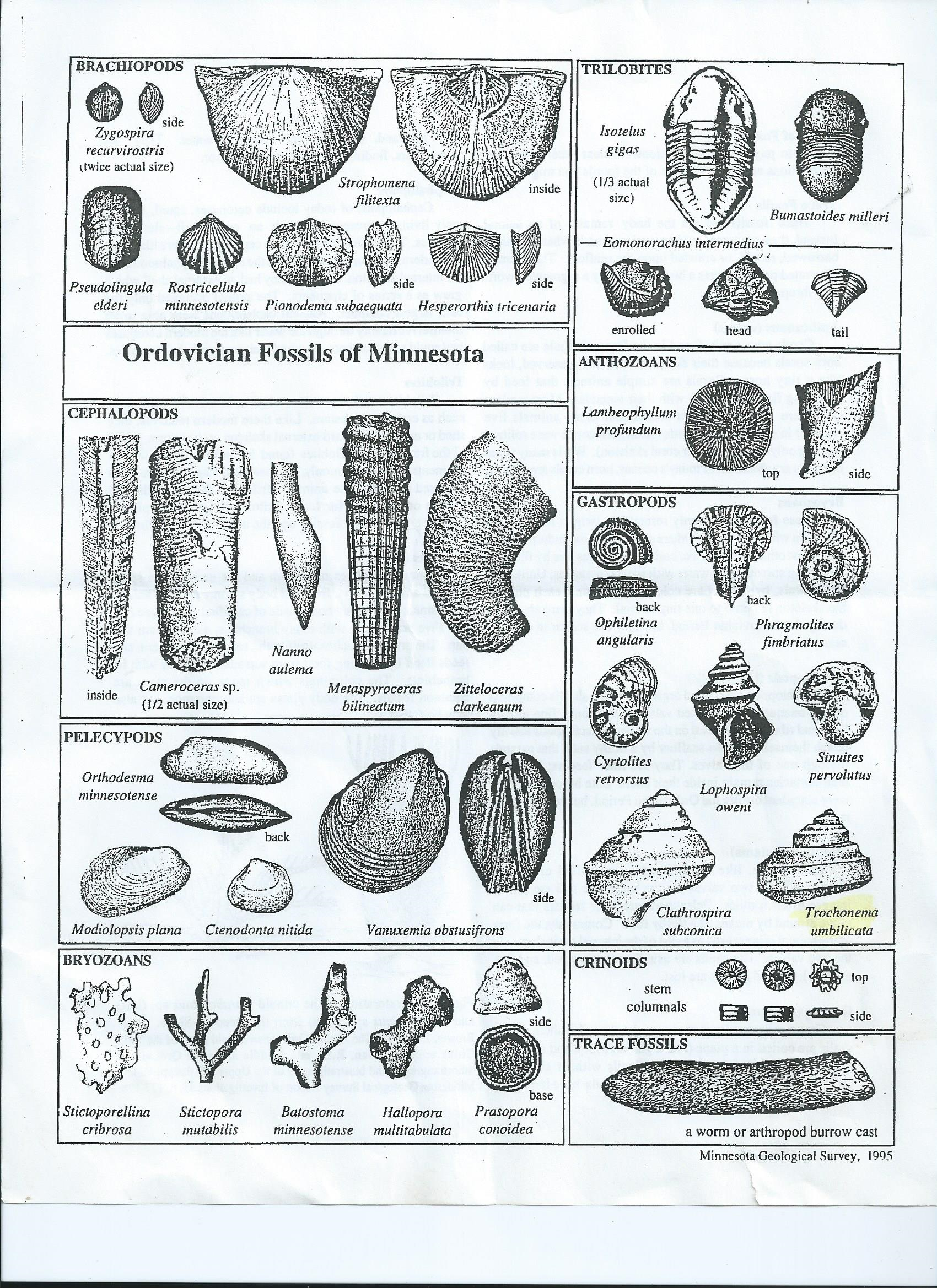 Fossil Worksheet