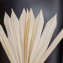 gebleichtes Palmblatt