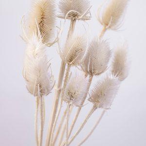 trockenblumen distel